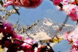 Bild-Panorama-Meran-und-Umgebung